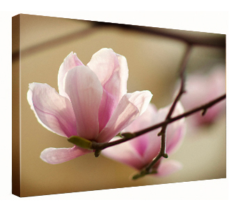Flower, Print on Canvas, Stretched on Canvas, Museum Stretch, Gallery Wrap Canvas